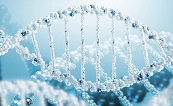 یک درصد نوزادان ایرانی با بیماری های ژنتیکی متولد می شوند