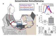 بازیابی حس لامسه در بیماران آسیب نخاعی با رابط جدید مغز و رایانه